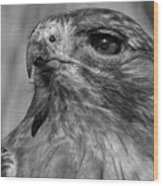 Red-tailed Hawk 2 Wood Print