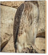 Red-tailed Hawk 4 Wood Print