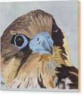 Red-tailed Hawk Portrait Wood Print
