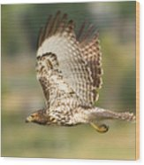 Red Tailed Hawk Hunting Wood Print