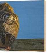 Red Tailed Hawk  IIi  Wood Print