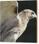 Red-tailed Hawk In Profile Wood Print