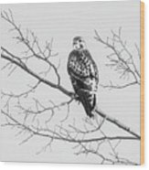 Red-tailed Hawk On Perch Wood Print