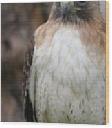 Red-tailed Hawks Wood Print