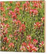 Red Texas Wildflowers Wood Print