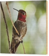 Red Throated Hummingbird Wood Print