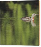Red Throated Loon Wood Print