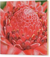 Red Torch Ginger Wood Print