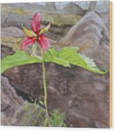Red Trillium In The Spring  Wood Print