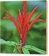 Red Tropical Flower In Huntington Botanical Gardens In San Marino-california  Wood Print