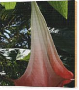 Red Trumpet Wood Print