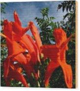 Red Trumpeter Wood Print