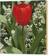 Red Tulip 09 Wood Print