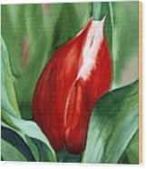 Red Tulip 2 Wood Print
