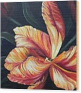 Red Tulip Blossom Wood Print