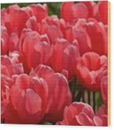 Red Tulip Buds Crest The Earth Wood Print