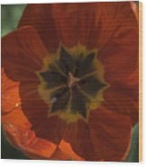Red Tulip Center Wood Print