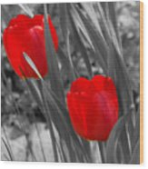 Red Tulip Duo Wood Print