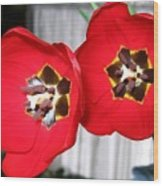 Red Tulip Duo Wood Print