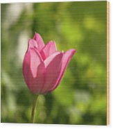 Red Tulip Head Wood Print