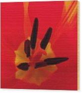 Red Tulip II Wood Print