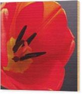 Red Tulip IIi Wood Print