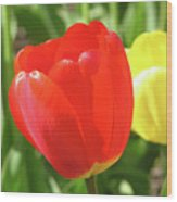 Red Tulip  Wood Print by Richard Mitchell