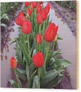 Red Tulip Row Wood Print