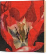 Red Tulip Texture Wood Print