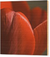 Red Tulip Up Close Wood Print