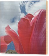 Red Tulips Flowers Art Prints Spring Tulip Garden White Clouds Baslee Troutman Wood Print