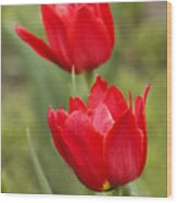 Red Tulips In A Meadow Closeup Sunny Spring Day Wood Print