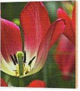 Red Tulips Petals Wood Print