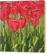 Red Tulips Square Wood Print