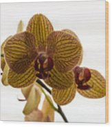 Red Veined Orchid Wood Print