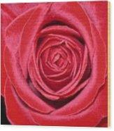 Red Velvet Rose Wood Print