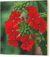Red Verbana Wood Print