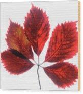 Red Vine Leaf Wood Print