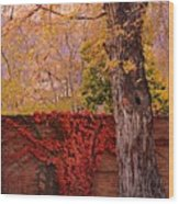 Red Vine With Maple Tree Wood Print
