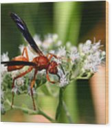 Red Wasp On Lace Wood Print