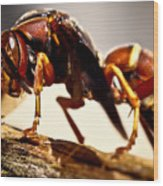 Red Wasp Wood Print by Ryan Kelly