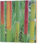 Red Wax Palm Stalks Wood Print