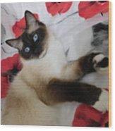 Red White And Ragdoll Kitty Cat Silktapestrykittenstm  Wood Print