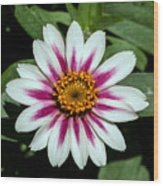 Red White And Yellow Flower Wood Print