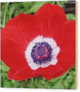 Red White N Blue Wood Print