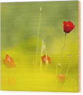 Red Wild Poppies Wood Print