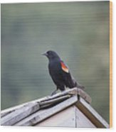 Male Red Wing Black Bird Wood Print