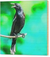Red Wing Blackbird Perching And Singing Wood Print