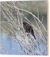 Red Winged Black Bird At Chatfield Wood Print