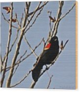 Red Winged Black Bird Wood Print